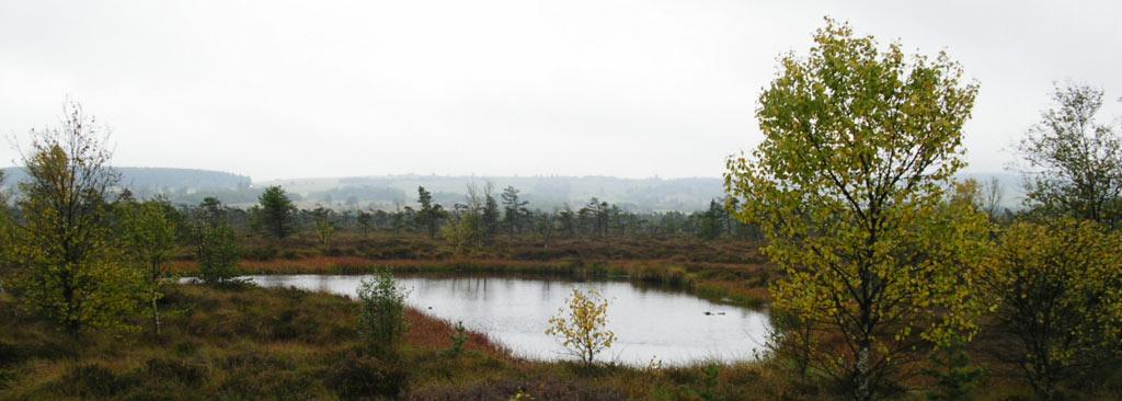 Schwarzes Moor Hochrhön